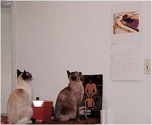 they're like staring for hours at my calendar